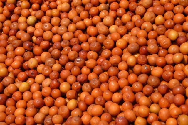 Indian jujube (Ziziphus mauritiana), fruits for sale, Zambia