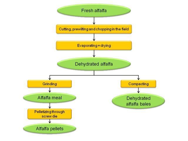 Alfalfa dehydration process