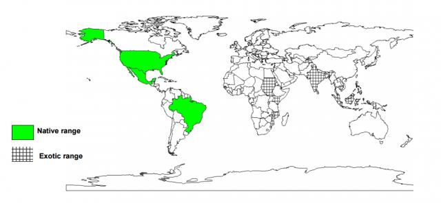 Cashew (Anacardium occidentale), worldwide distribution