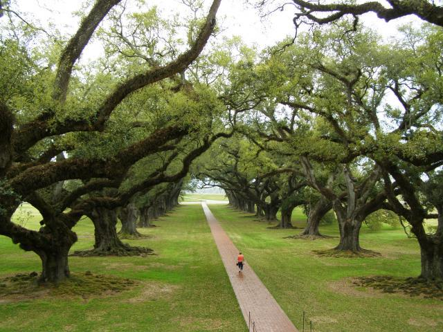 Alley of live oaks, Louisiana, USA