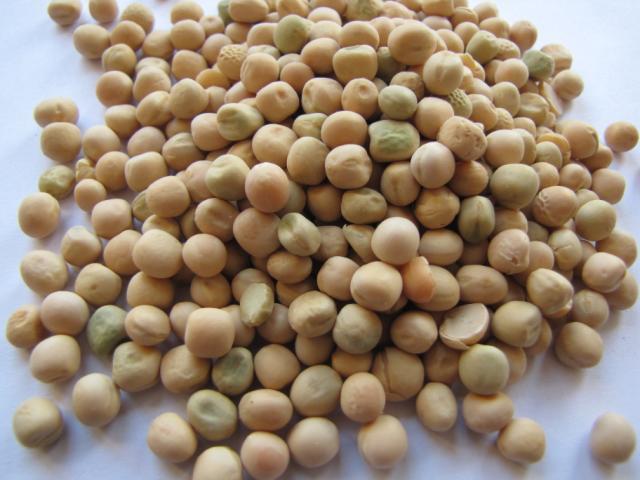 Feed peas, France