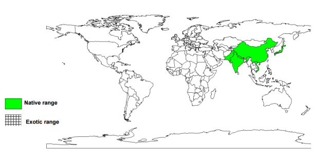 Blue Japanese oak (Quercus glauca), worldwide distribution